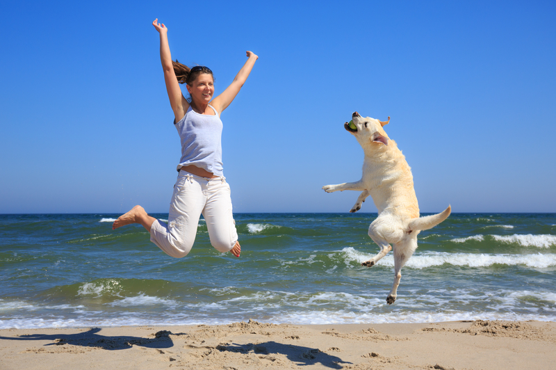 http://www.dreamstime.com/royalty-free-stock-photos-woman-dog-breed-labrador-jumping-beach-background-sea-image42438778