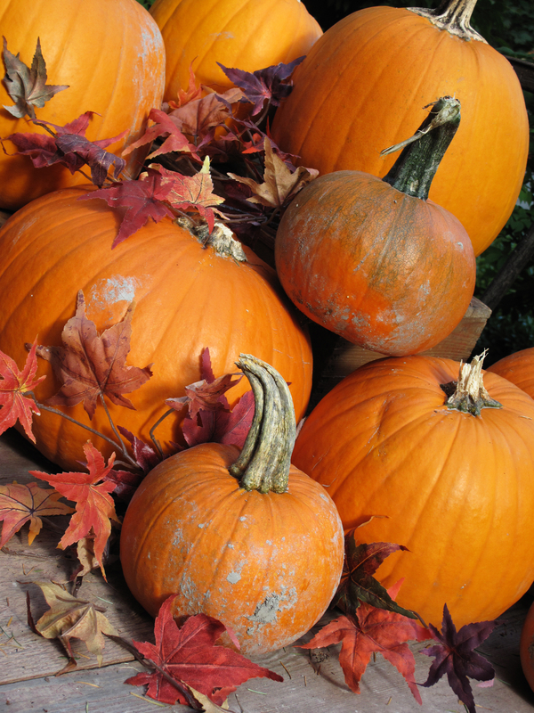 http://www.dreamstime.com/royalty-free-stock-photos-pumpkins-image13645348