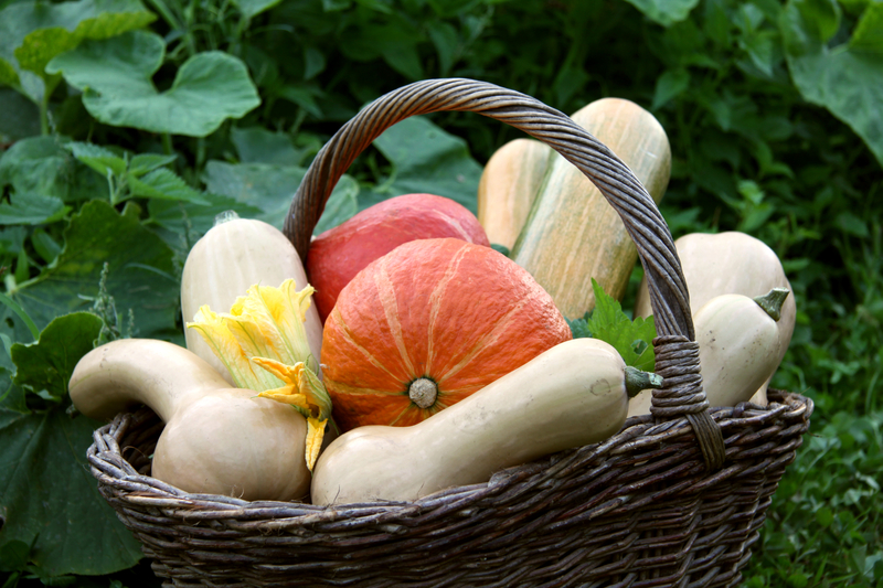http://www.dreamstime.com/stock-photography-pumpkins-basket-image15879002