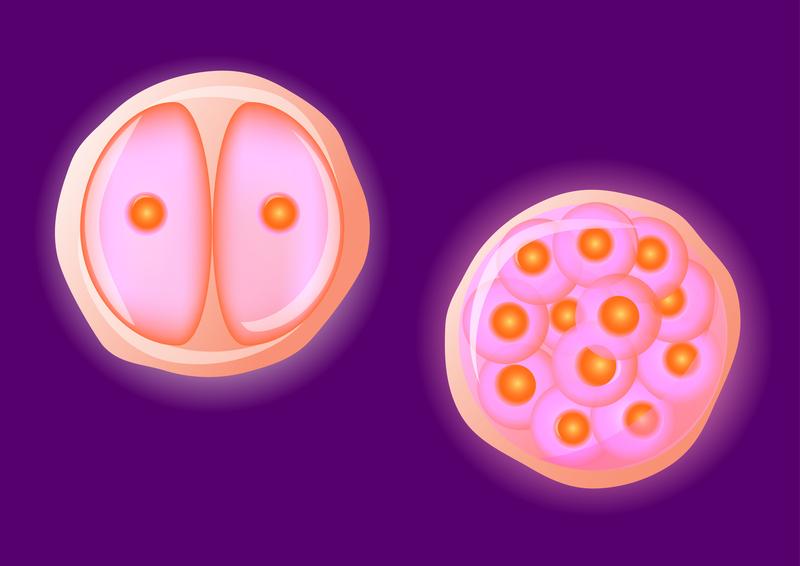 jajne ćelije